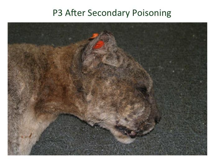 Dog Friendly Rat Poison